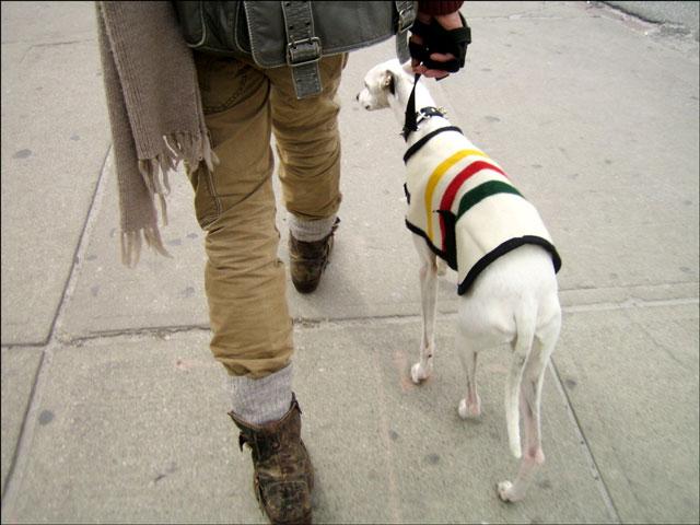 dog streeter 01