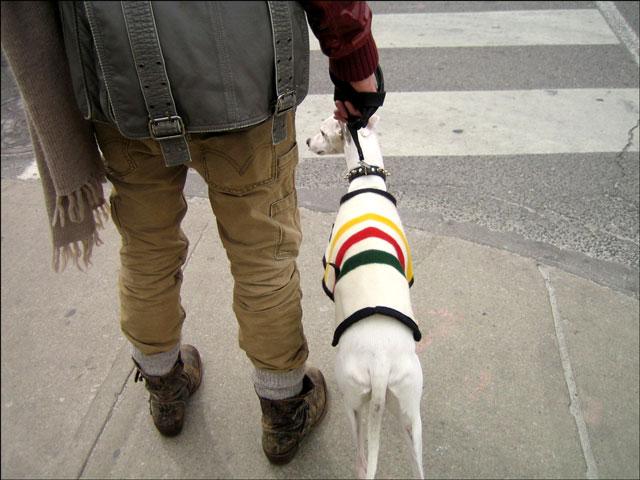 dog streeter 02