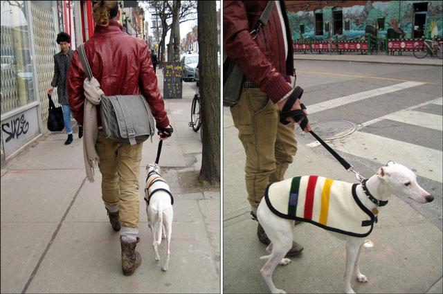 dog streeter 03