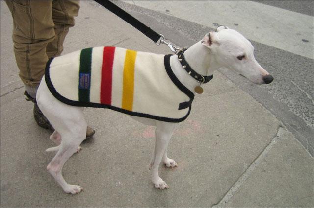 dog streeter 04