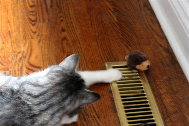 eddie and his hedgehog 04
