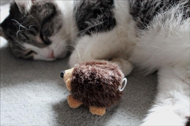 eddie and his hedgehog 08