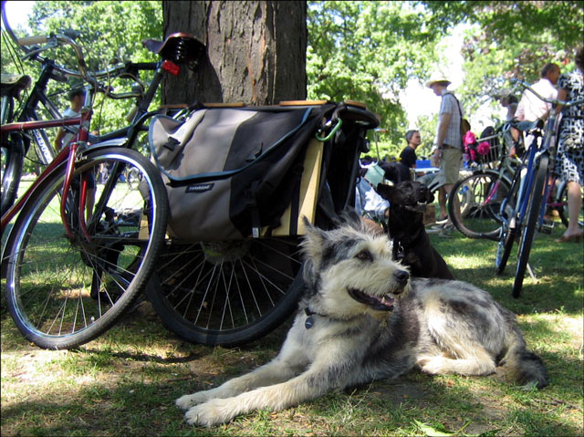 dogs at the bike show