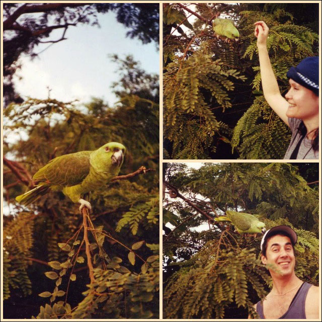 parrot Collage costa rica1