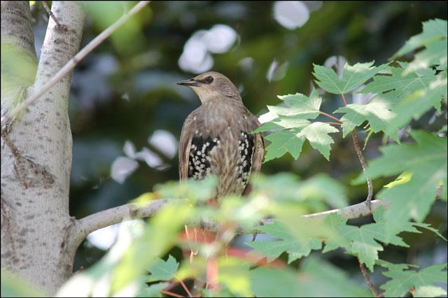 bird in the morning