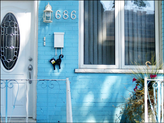cat on a light blue house