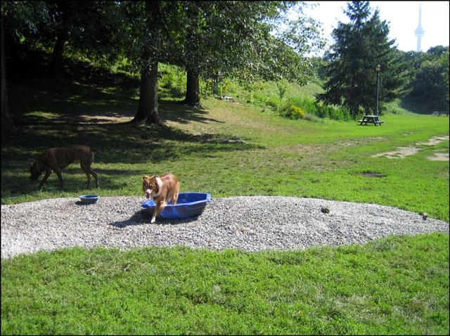 makeshift doggy pool