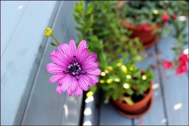 purple flower in morning li