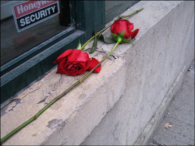 abandoned long stemmed rose