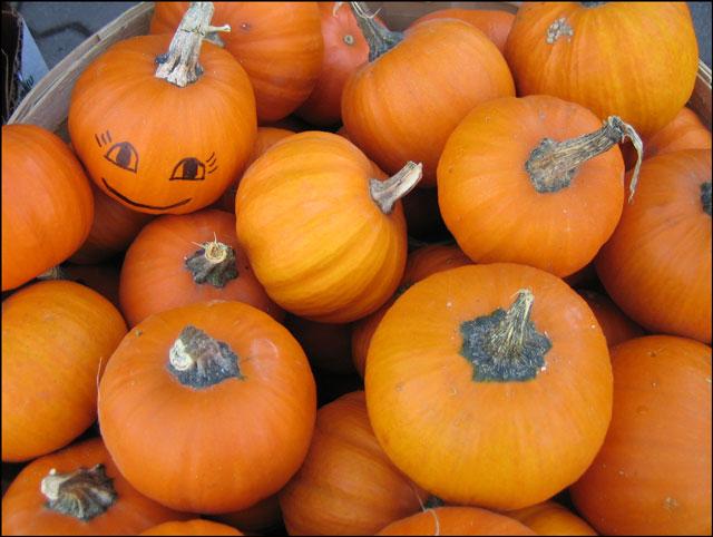box of small pumpkins