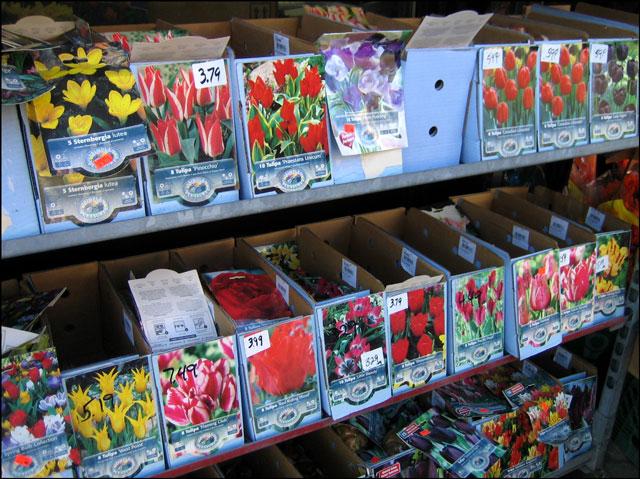 bulbs at garden center