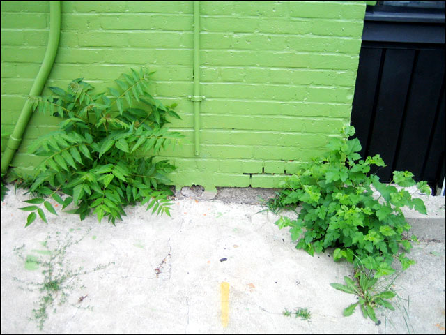 green wall and weeds