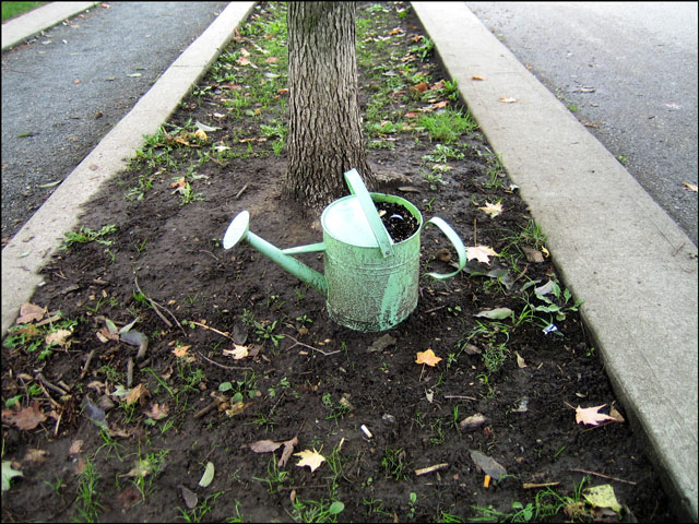 green watering can 2