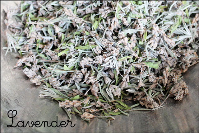 lavender leaves and buds