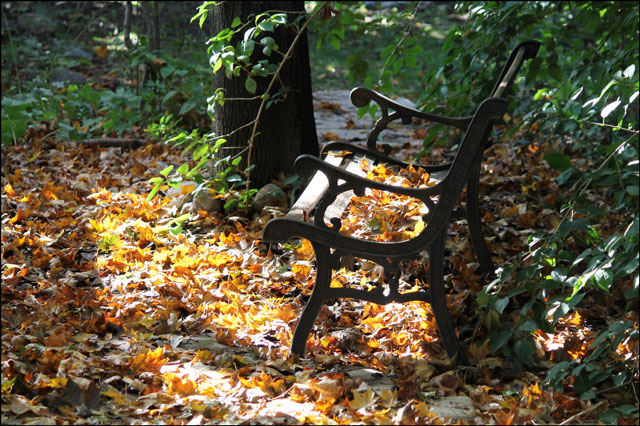 old bench and leaves