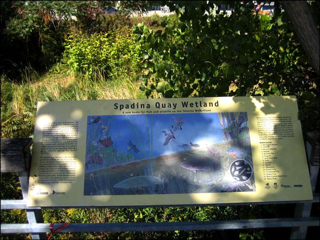 spadina quay wetland inform