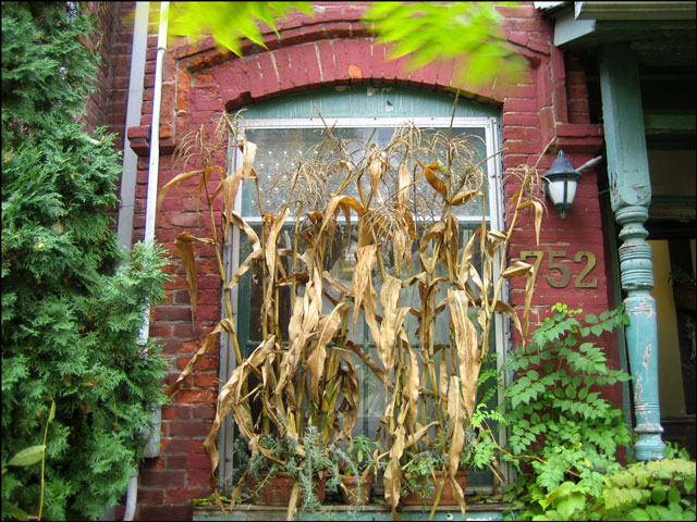 window decorated with corn
