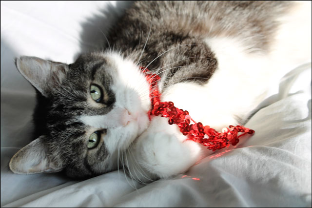 eddie-christmas-cat-01
