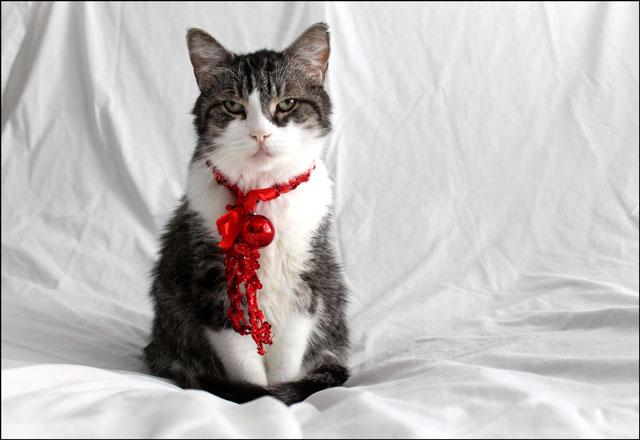 eddie-christmas-cat-09