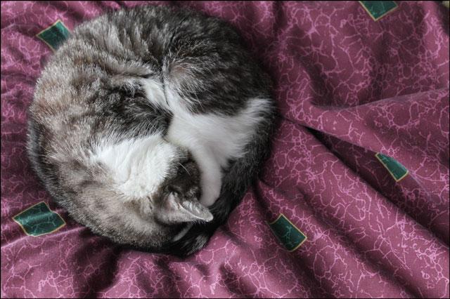 ed-sleeping-in-circle-01