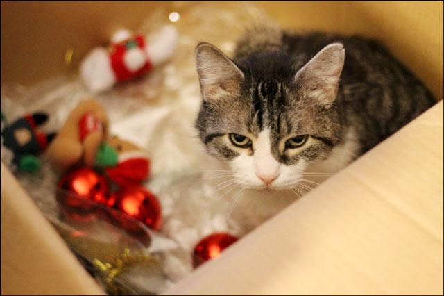 eddie-in-christmas-packing-