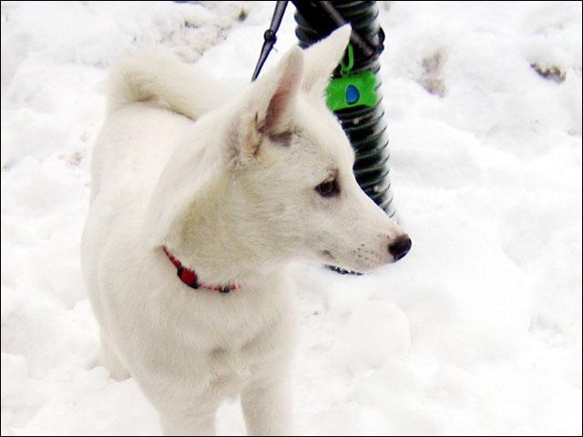 puppy-close-up