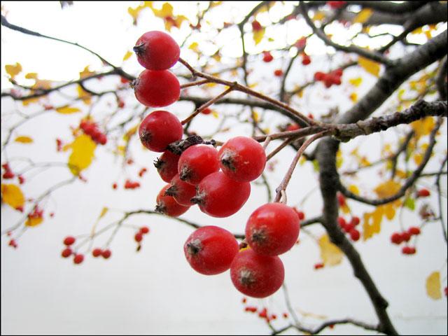 tree-pomes-01