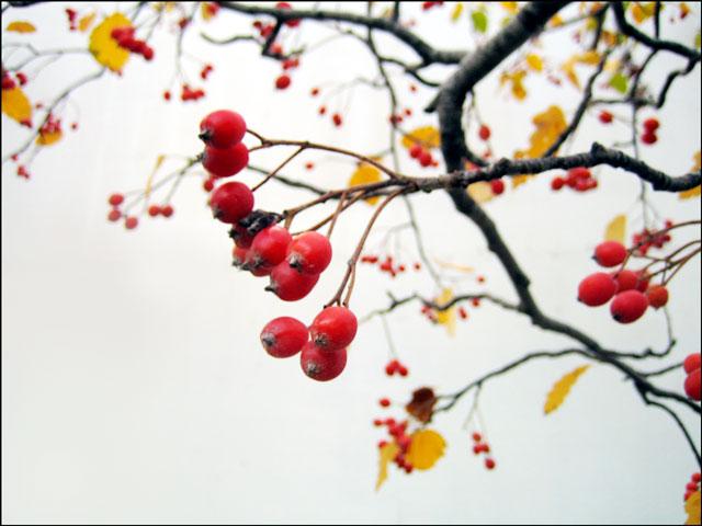 tree-pomes-02