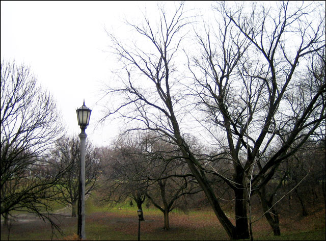 wet-and-grey-in-the-park
