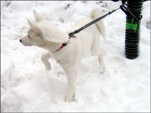 white-puppy-01
