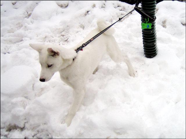 white-puppy-02