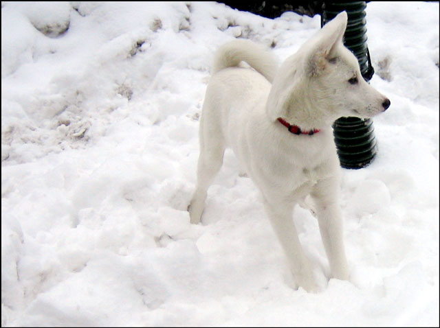 white-puppy-04
