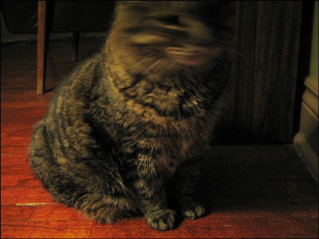 columbo-paws