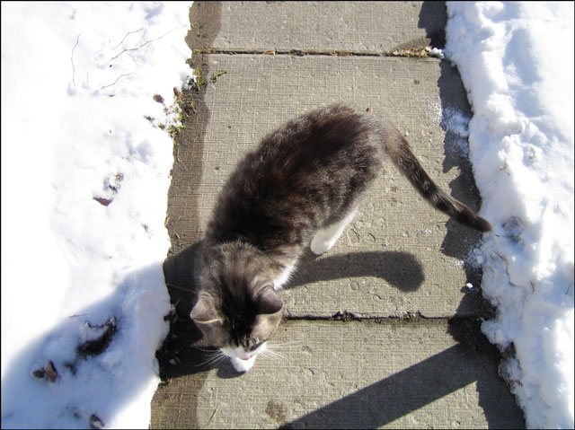 ed-outside-on-snowy-day