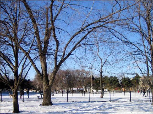 snowy-leash-off-dog-park