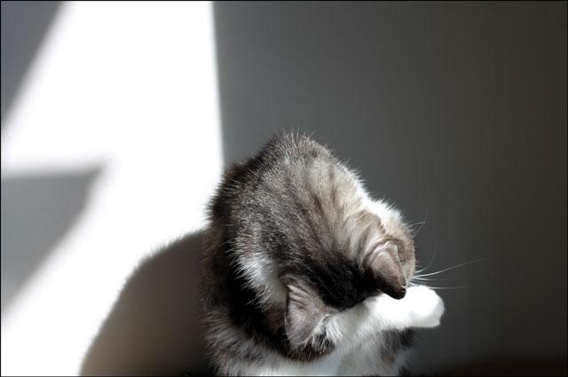 cat-bath-in-a-sunbeam-3