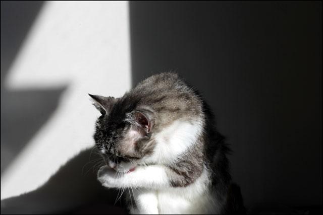 cat-bath-in-a-sunbeam-4
