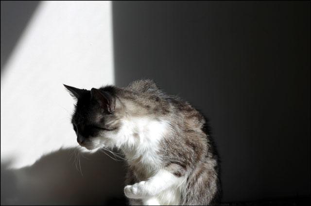 cat-bath-in-a-sunbeam-5