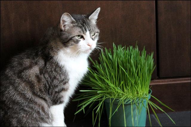 ed-and-catgrass-01