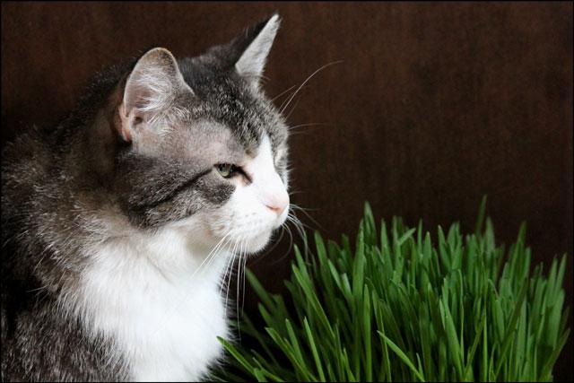 ed-and-catgrass-03