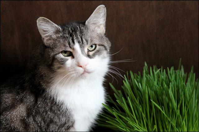 ed-and-catgrass-04