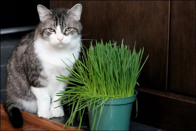 ed-and-catgrass-07