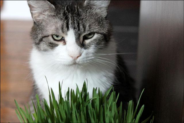 ed-and-catgrass-08