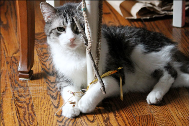 ed-playing-with-macrame-toy