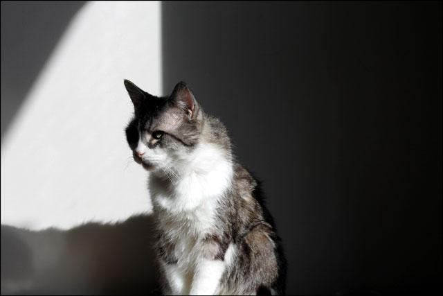 eddie-in-a-sunbeam-5