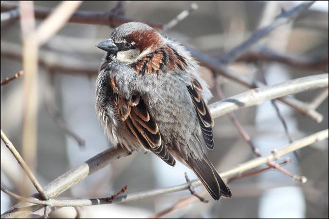 sparrow-05