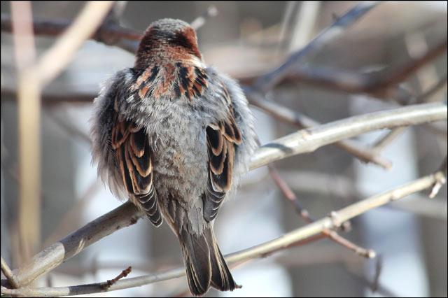 sparrow-06