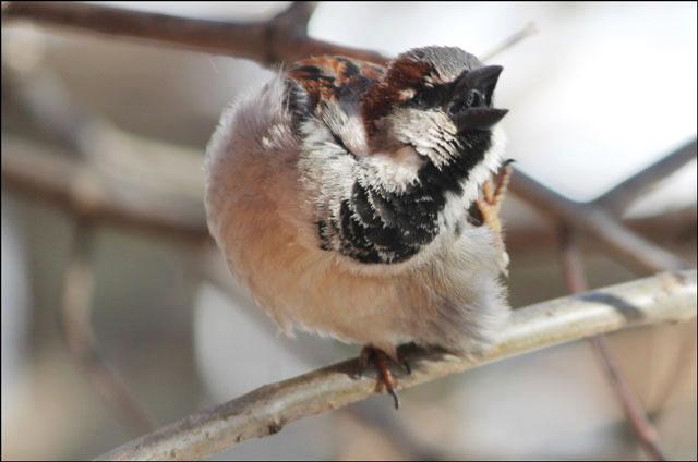 sparrow-07