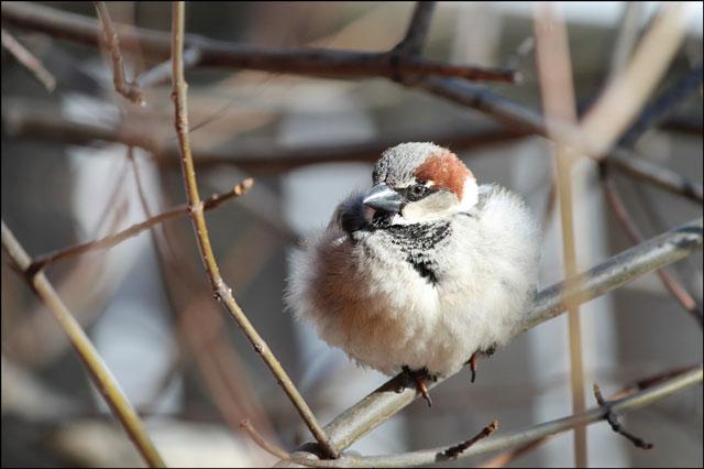 sparrow-08