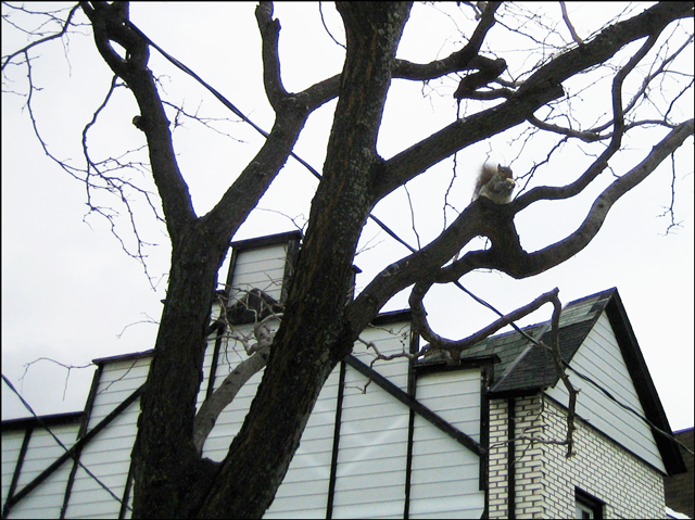 squirrel-in-a-tree